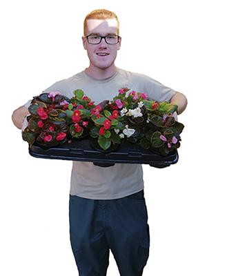 plantes-serveis